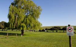 Pine-Country-Dog-Park.jpg