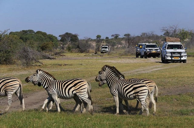 Self-Drive-Adventures-Botswana.jpg